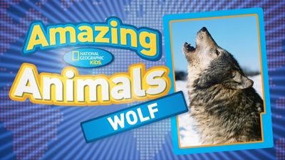 Season 01, Episode 04 Gray Wolf