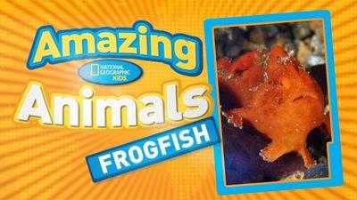 Season 01, Episode 06 Frogfish