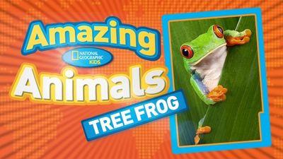 Season 01, Episode 07 Red-Eyed Tree Frog
