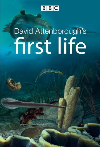 First Life Poster