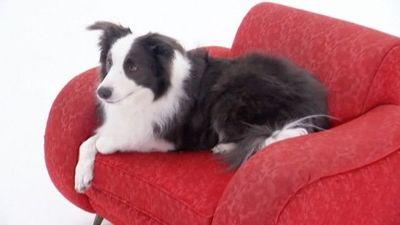 Season 02, Episode 05 Bernese Mountain Dog, Afghan, Portuguese Water Dog, Cairn Terrier, Alaskan Malamute