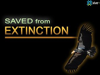 Saved from Extinction Poster