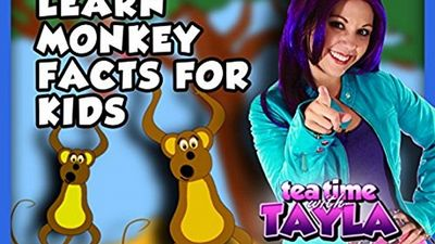 Watch SHOW TITLE Season 04 Episode 04 Learn Monkey Facts for Kids on Tea Time with Tayla