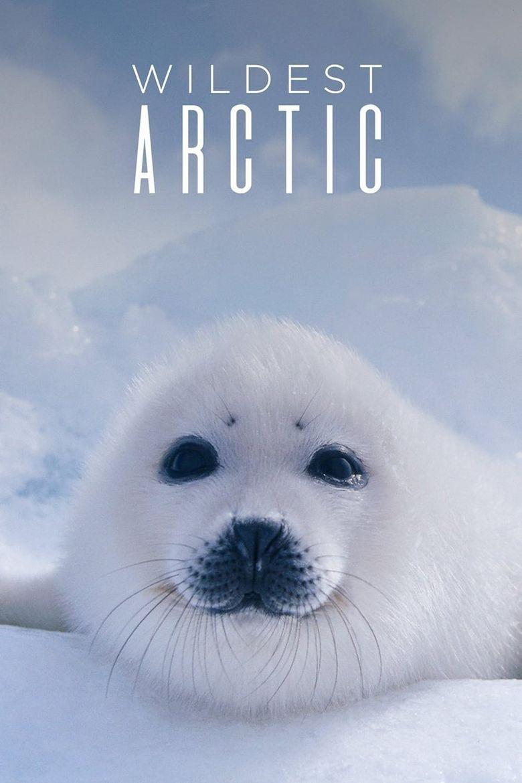 Wildest Arctic Poster