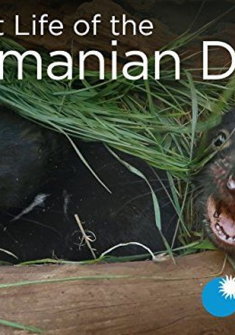 Secret Life of the Tasmanian Devil Poster