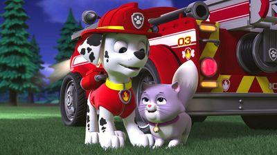 Season 08, Episode 03 Pups Save a City Kitty / Pups Save a Cloud Surfer