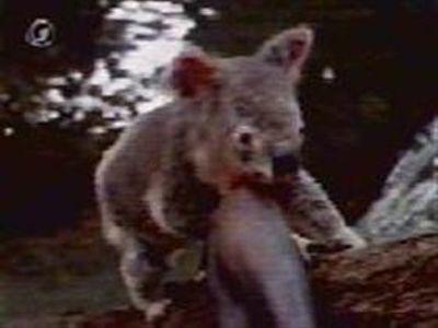 Season 02, Episode 19 The Scarlet Koala