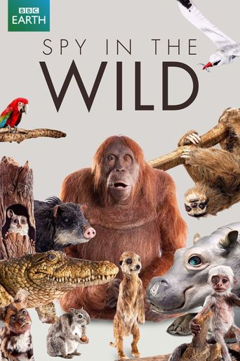 Spy in the Wild Poster