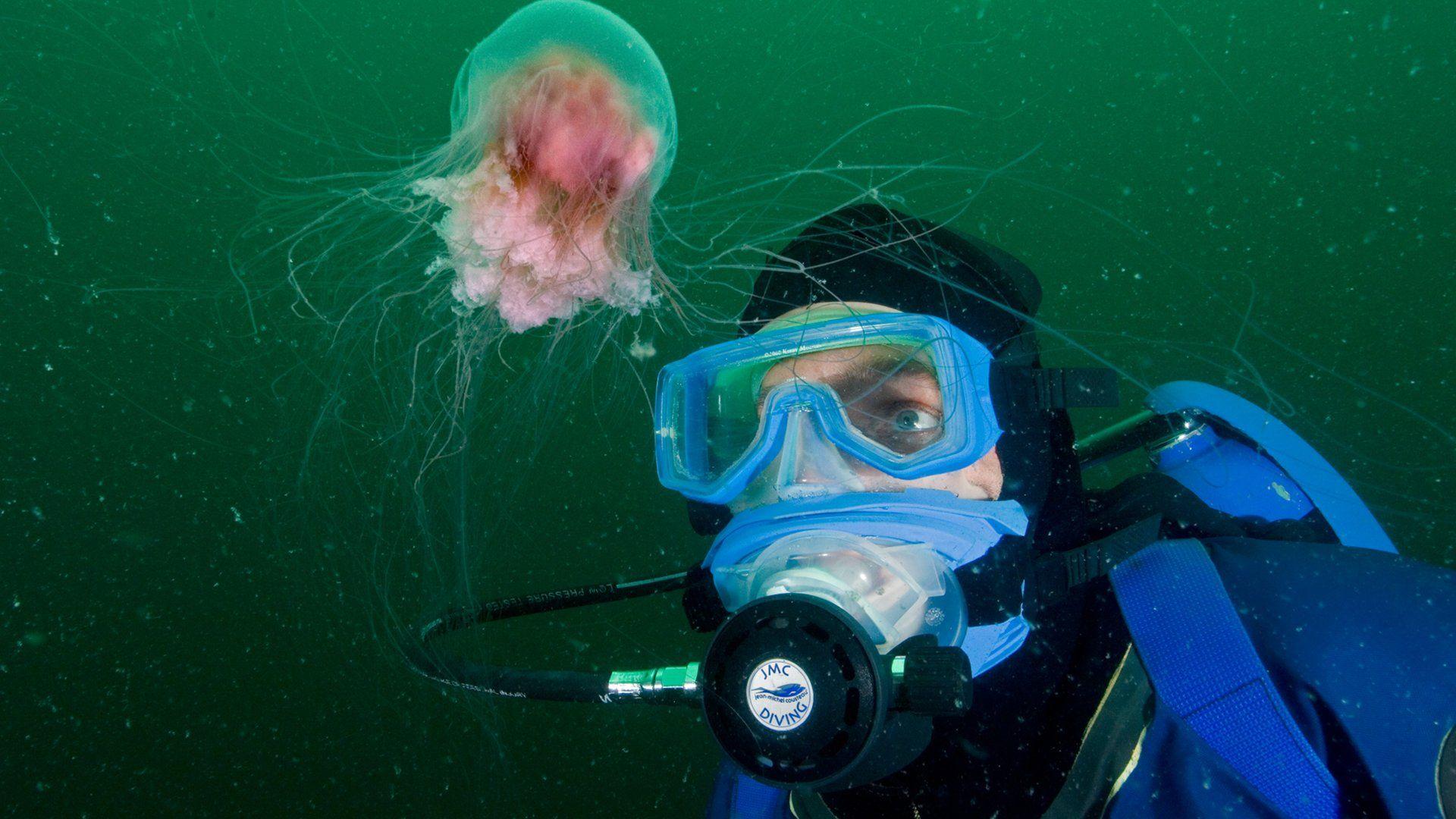 картинки подводного мира кусто