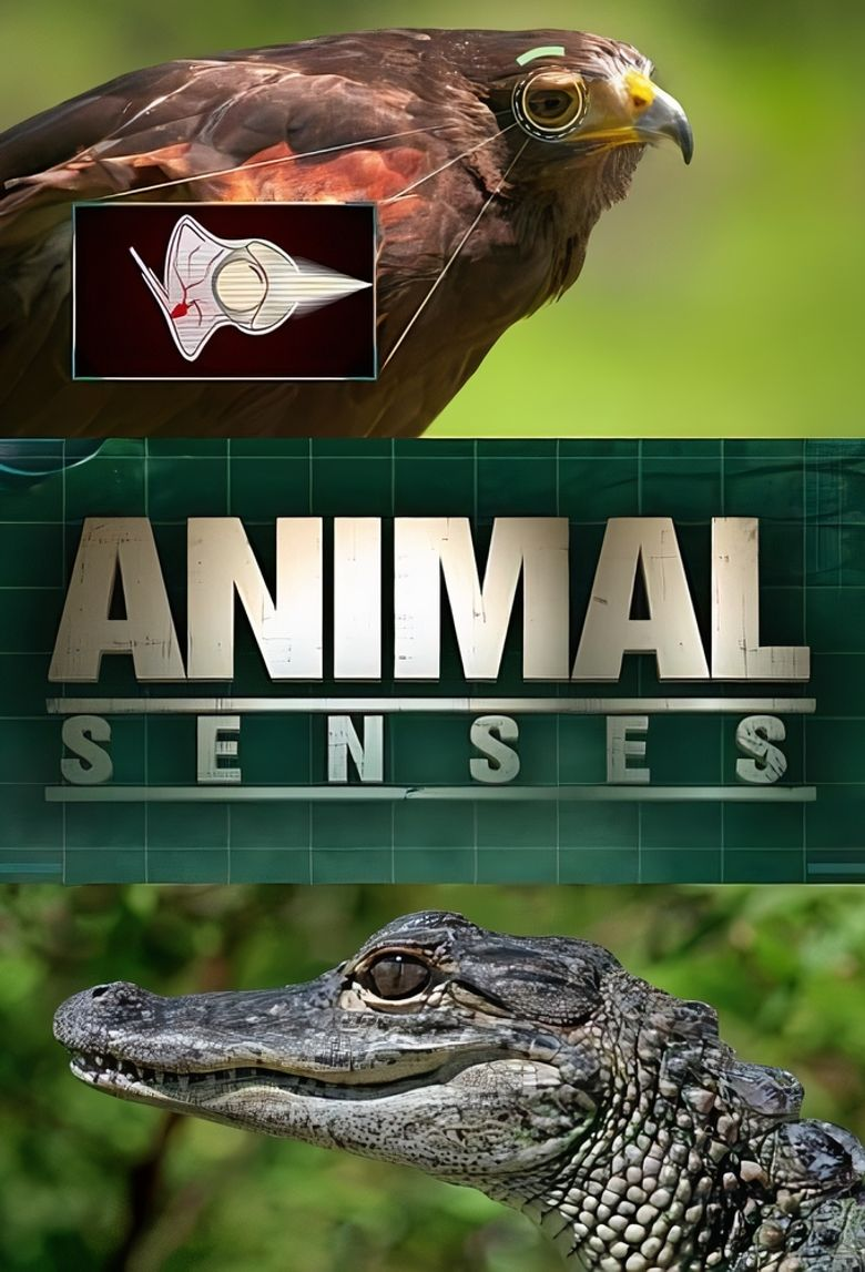 Animal Senses Poster