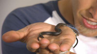 Season 01, Episode 03 Tiger Snake