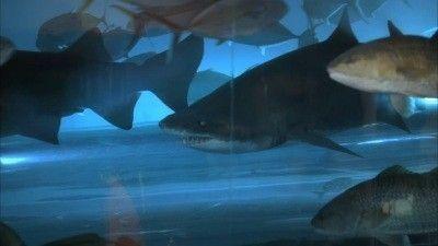 Season 11, Episode 02 Pool Shark
