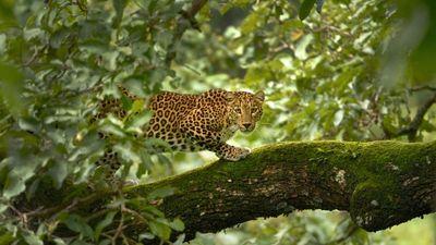 Season 01, Episode 01 Wild India