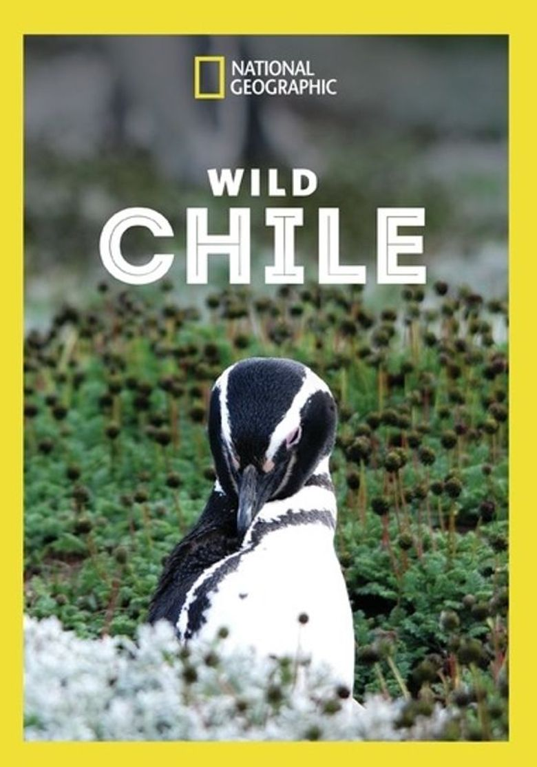 Wild Chile Poster