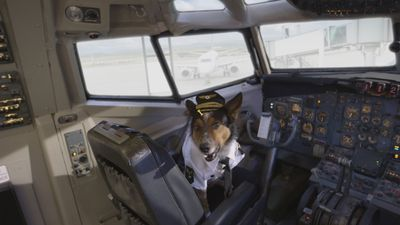 Season 01, Episode 23 Dogs on a Plane