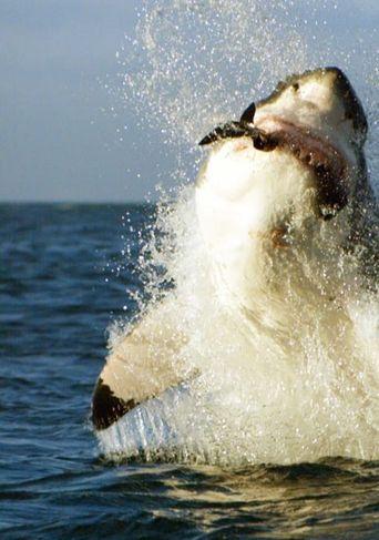 Shark Week's Most Intense Encounters Poster