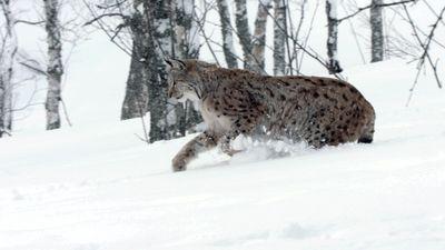 Season 02, Episode 03 Siberia's Frozen Heart