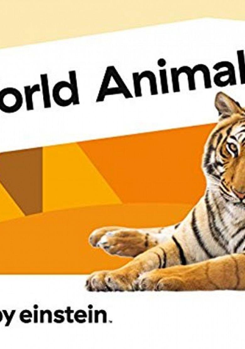 Animal Favorites Poster
