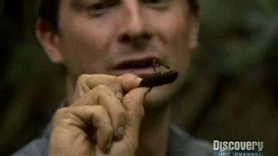 Season 02, Episode 07 Bear Eats