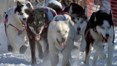 Season 18, Episode 04 Sled Dogs: An Alaskan Epic