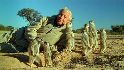 Season 31, Episode 06 Attenborough's Life Stories: Part Two - Understanding the Natural World