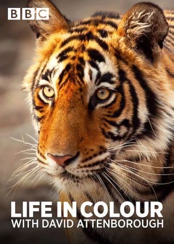 Attenborough's Life in Colour Poster