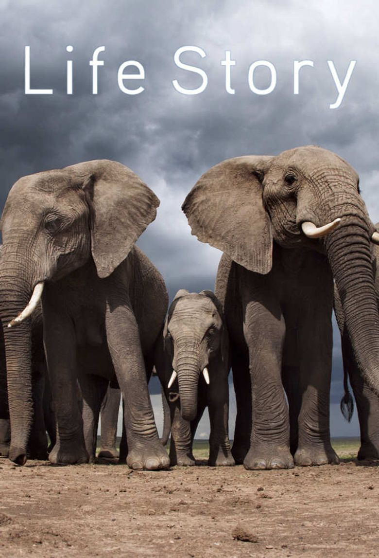Watch Life Story
