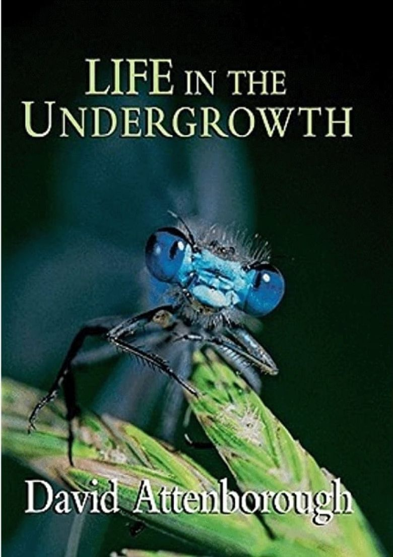 Life in the Undergrowth Poster