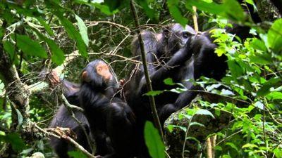 Watch SHOW TITLE Season 01 Episode 01 Virungas