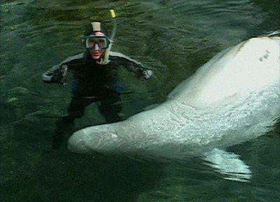 Watch SHOW TITLE Season 04 Episode 04 Marine Mammals