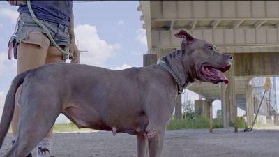 Season 02, Episode 04 Street Dog Ash Just Wants a Little Love