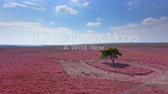 A Wild Year Poster
