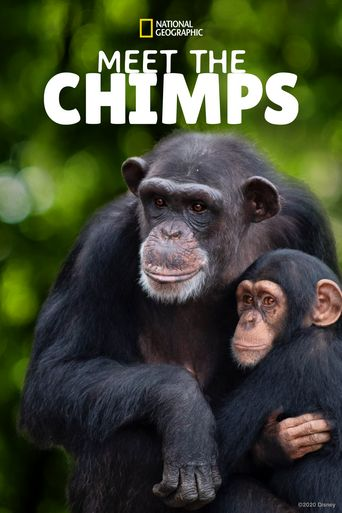 Meet the Chimps Poster