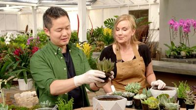 Watch SHOW TITLE Season 02 Episode 02 Succulents in the City