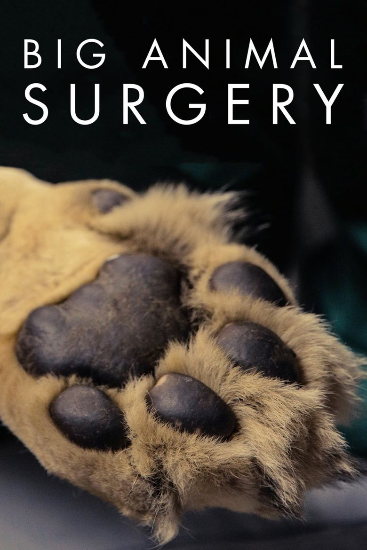 Big Animal Surgery Poster