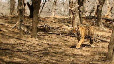Season 01, Episode 03 Clash of Tigers