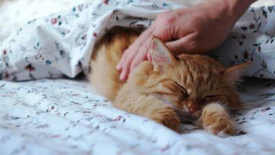 Season 01, Episode 04 BFF: Dog vs. Cat - Ep. 4