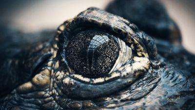 Season 01, Episode 03 Baddest: Flying Reptile vs. Colossal Croc - Ep. 3