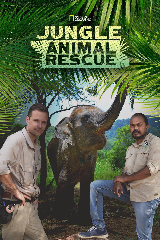 Jungle Animal Rescue Poster