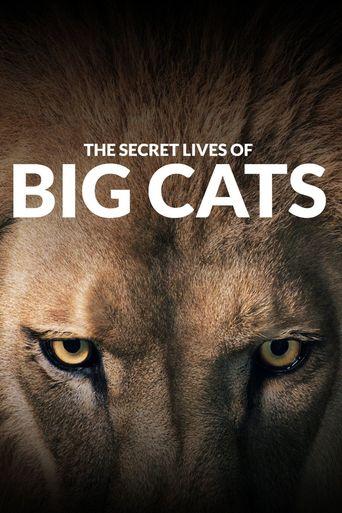 The Secret Lives of Big Cats Poster