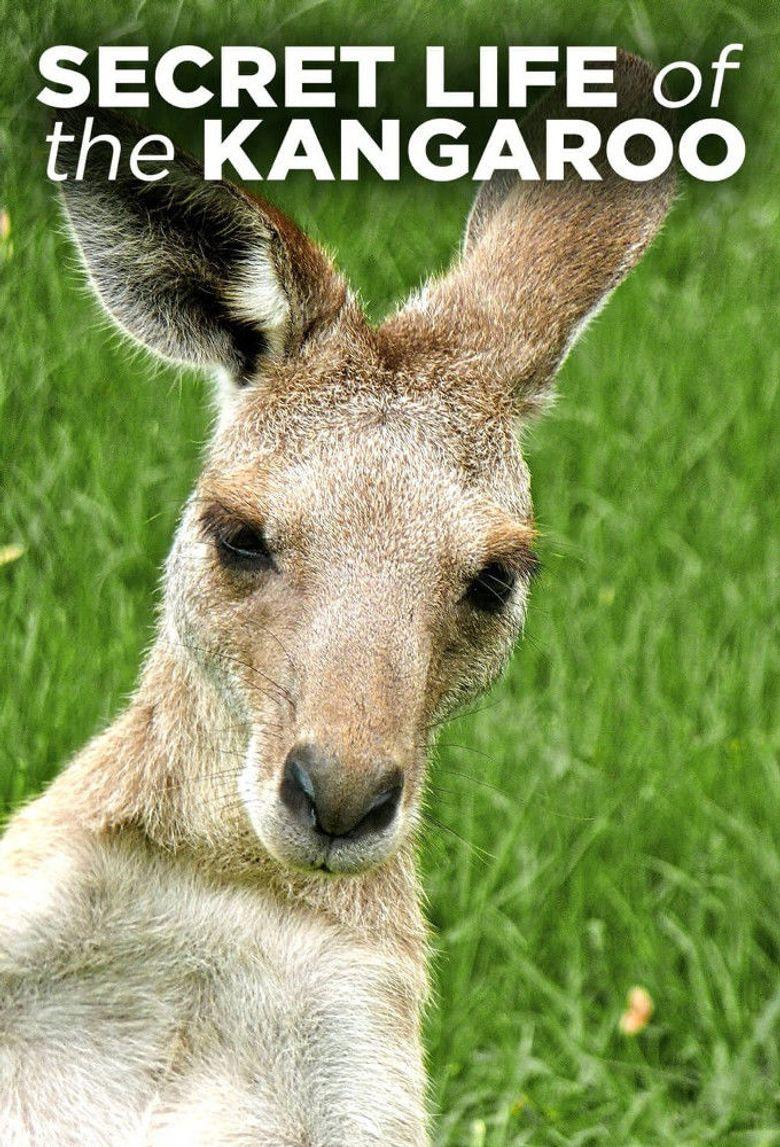 Secret Life of the Kangaroo Poster