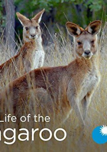 Secret Life of the Kangaroo Poster