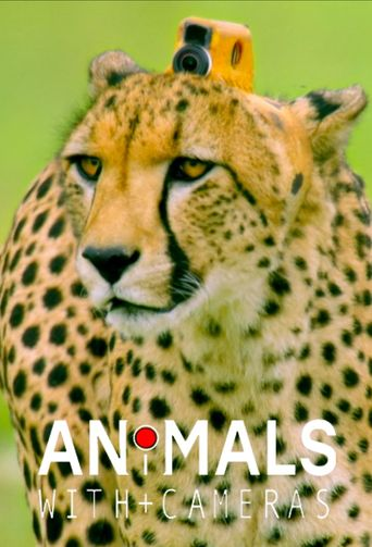 Animals with Cameras Poster