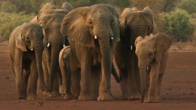 Season 01, Episode 08 Elephants on the Edge