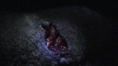 Season 02, Episode 04 Range Riding