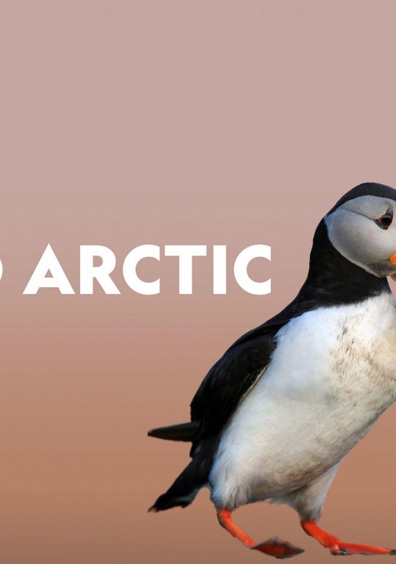 Wild Arctic Poster