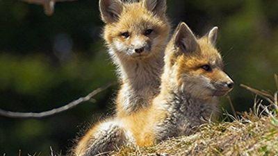 Season 01, Episode 01 Foxes