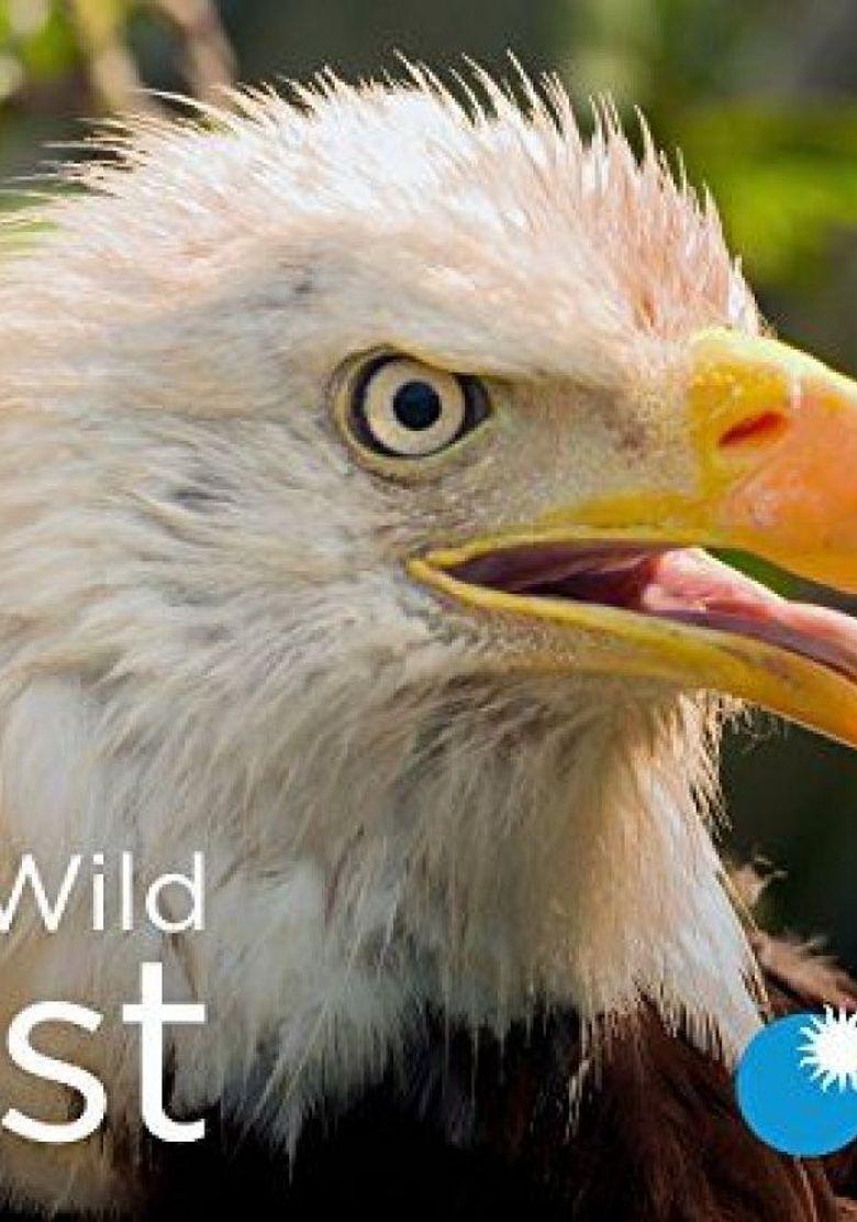 Wild Wild East Poster