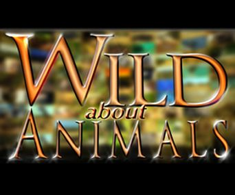 Wild About Animals Poster
