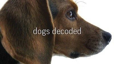 Season 38, Episode 04 Dogs Decoded